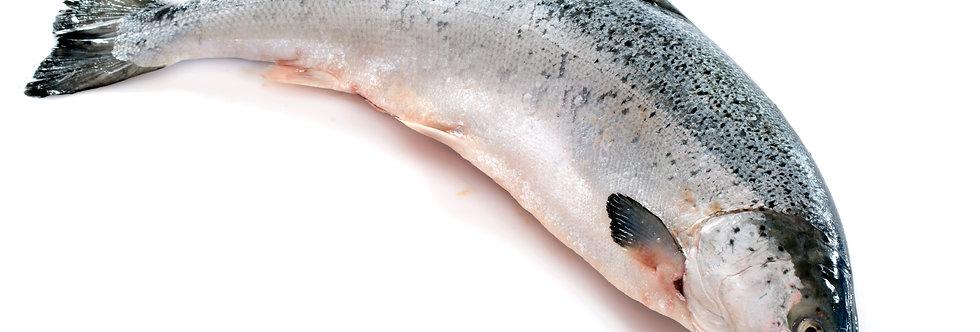 Salmon Whole - Fresh