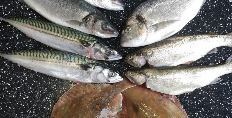 Whole Fish Box - Fresh