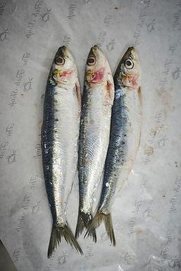 Whole Sardine 1kg - Fresh