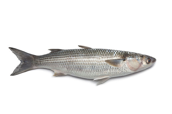 Silver Mullet Whole Wild - Fresh