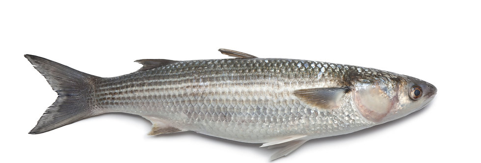 Silver Mullet Whole - Fresh Wild