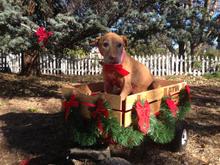 Anna Christmas Wagon