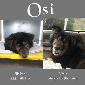 Osi Before and After - NX3.jpg