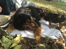 Koda & Belly