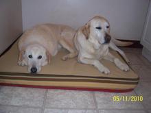 Barney & Bucky