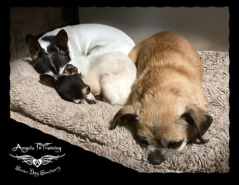 Happy Little Family - Snuggles, Fiona & Chappy - Cropped 2.jpg