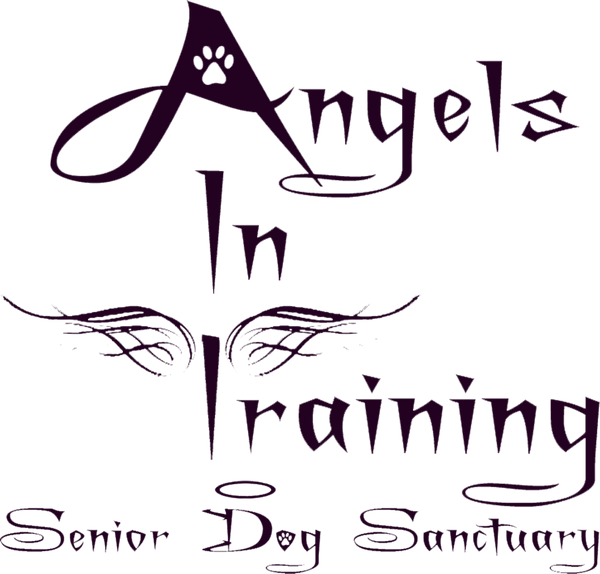 Angels In Traning