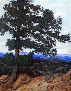 Windblown Tree Flagstaff Mtn