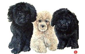 Nice Pups