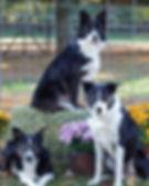 robin ford dog training, dog training toledo, dog nose work