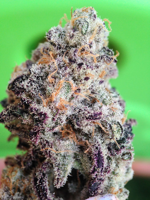 Mac - Bred By Capulator - SUPER FROSTY! BACK!