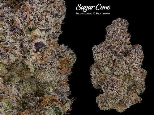 Sugar Cane #6  - Delish!!!