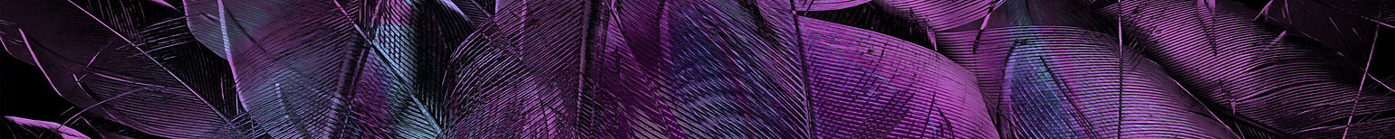 feather strip 15x1.jpg