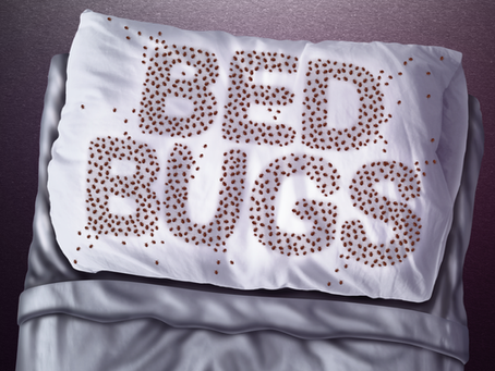 Who Gets Bed Bugs?