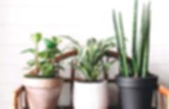 Stylish%20green%20plants%20in%20pots%20o