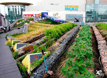 Focus on green roofs, a sustainable solution for solar heat gain issues