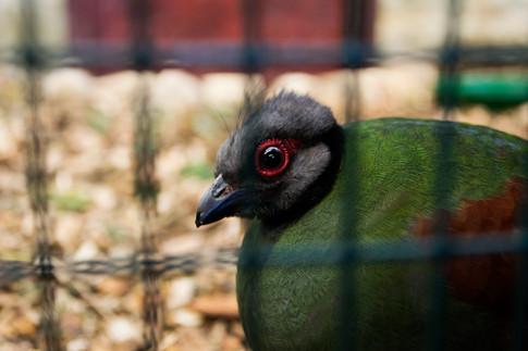 afraid bird