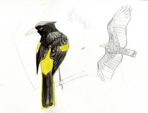 yellow-winged-cacique.jpg