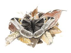 papillon feuille.jpg