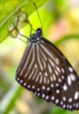 butterfly-2183036_1920.jpg