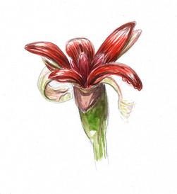 fleur gingembre.jpg