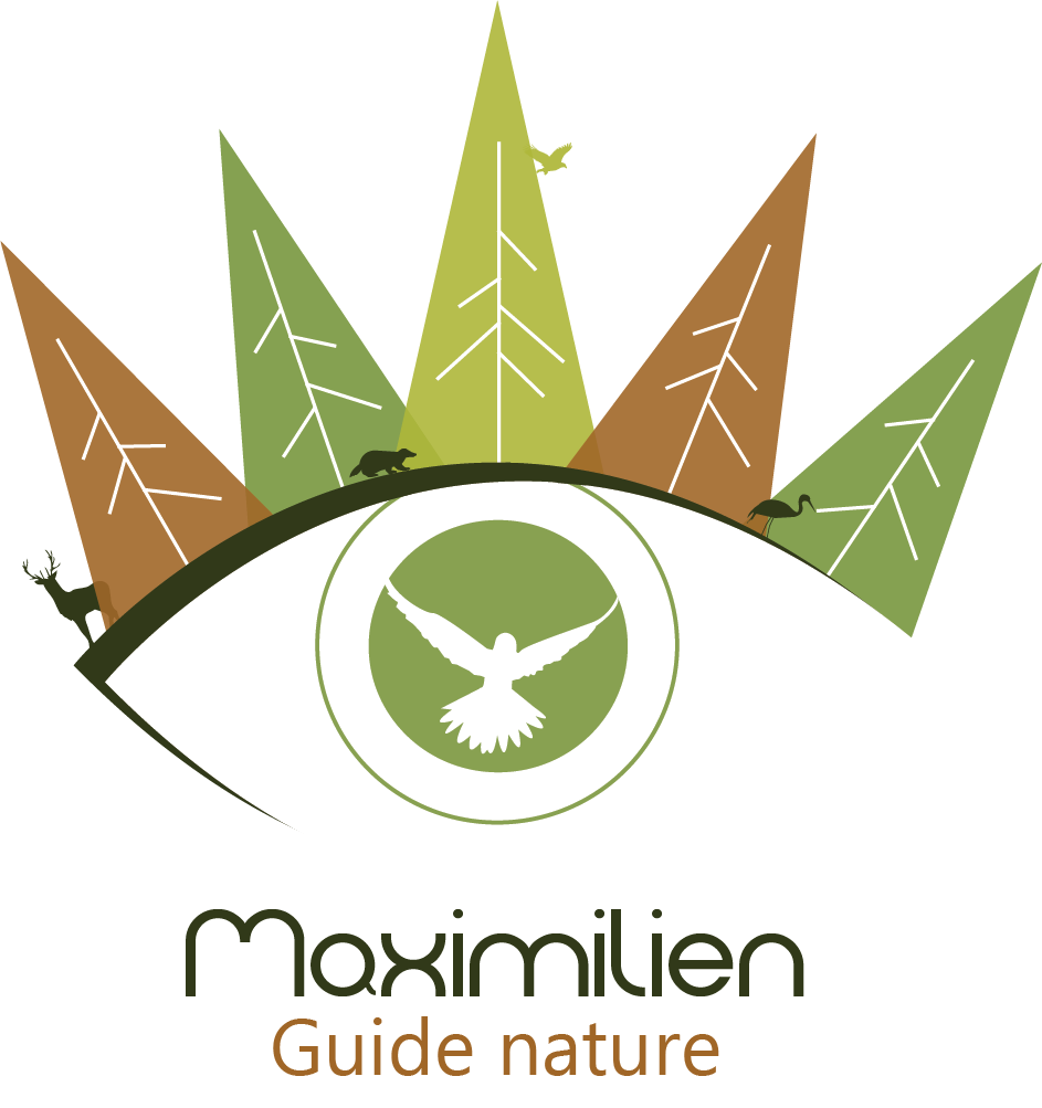 Création logo et catalogue_Graphisme