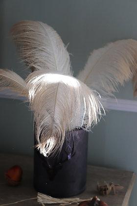 Véritables plumes blanches d'autruche