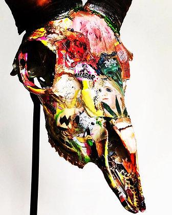 Skull Mouflon Ibérique