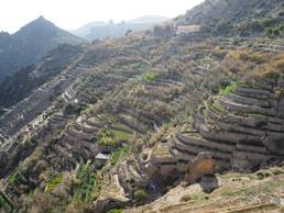 Alfaj Terraced Farms, Oman