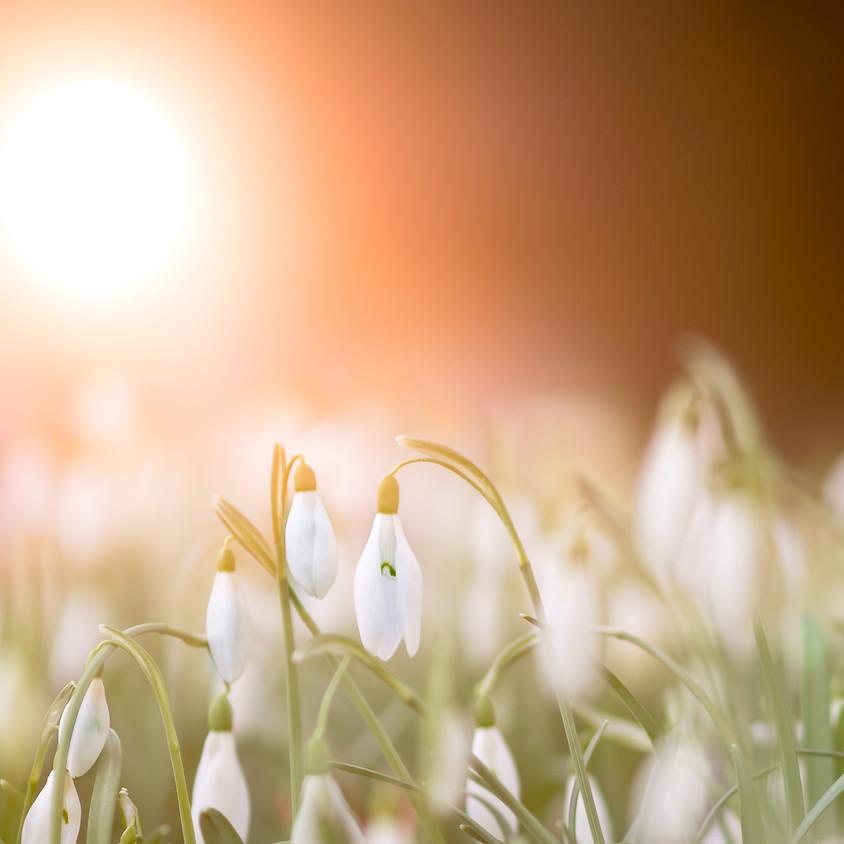 Spring Revive & Restore Yoga