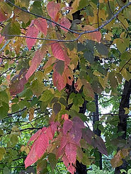 Fall Purplish.jpg