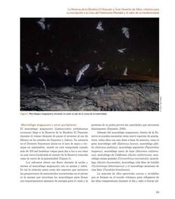 Bats_UNESCO