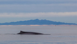 Whale and Pinacate