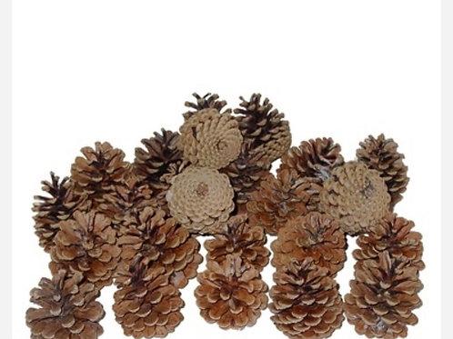 Mini Pine Cones 100% Organic