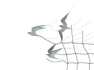 Flying terns, freestanding drawing