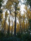 Wald01.jpg