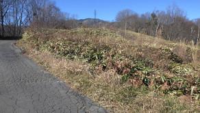 小雨グラウンド周辺の草刈り及び側溝清掃ボランティアを実施しました。