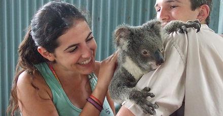 Koala en Zoo