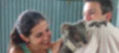 Koala in Zoo