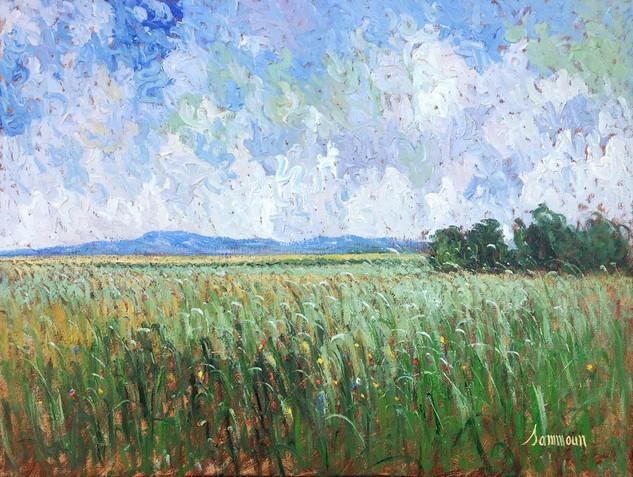 "Samir Sammoun ""Green Wheat Field, Ile d'Orleans"""