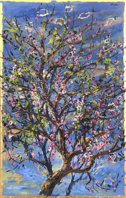 Almond Tree, Full Bloom