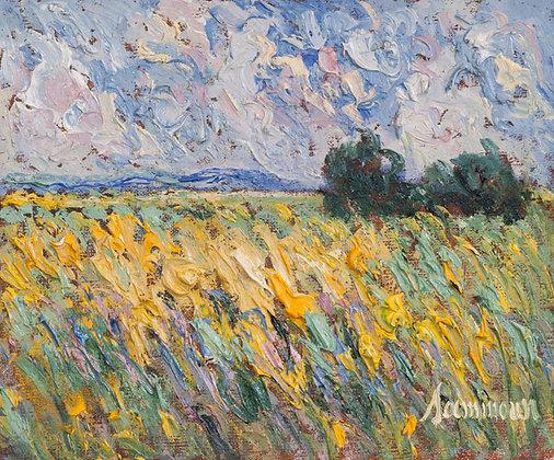Samir Sammoun - Mustard Field Ile d'Orleans