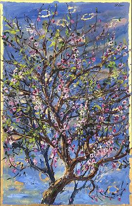 Bruno Zupan - Almond Tree Full Bloom