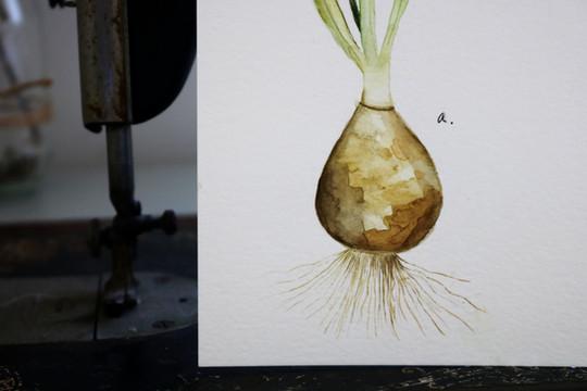 Antique Botanicals- Daffodils