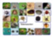 tekensoorten.jpg