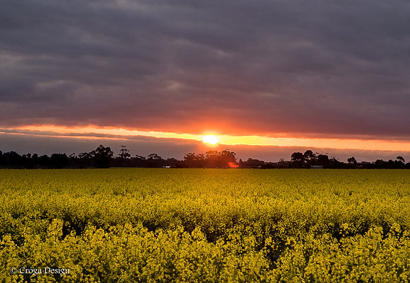 sunset on the fields of gold