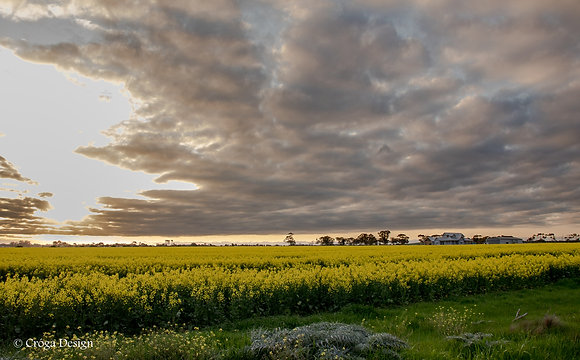 Storm over fields of Gold