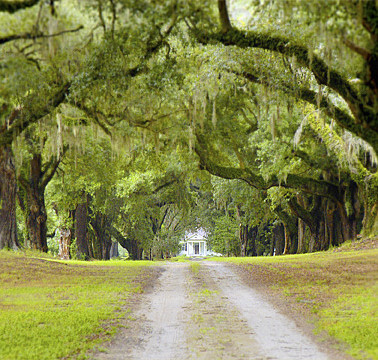 Oak Alley at Mansfield Plantation