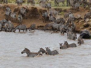Facts on Zebras and Global Partnership