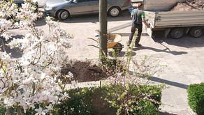 Van puin naar tuin: boomtuintjes in de Gratamastraat